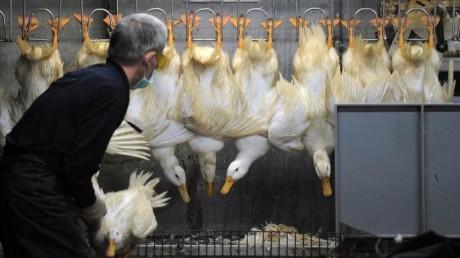 Grippe aviaire: et si vos patients étaient concernés?