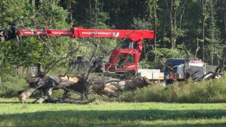 GCO: forêt du Krittwald en danger immédiat/ Vinci-Sanef attaquent les arbres à Vendenheim
