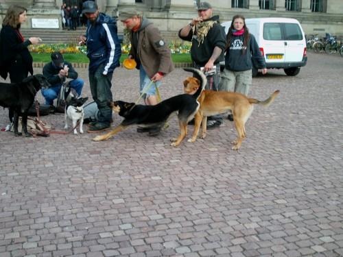 Référé justice de la ville de Strasbourg contre les Don Quichotte