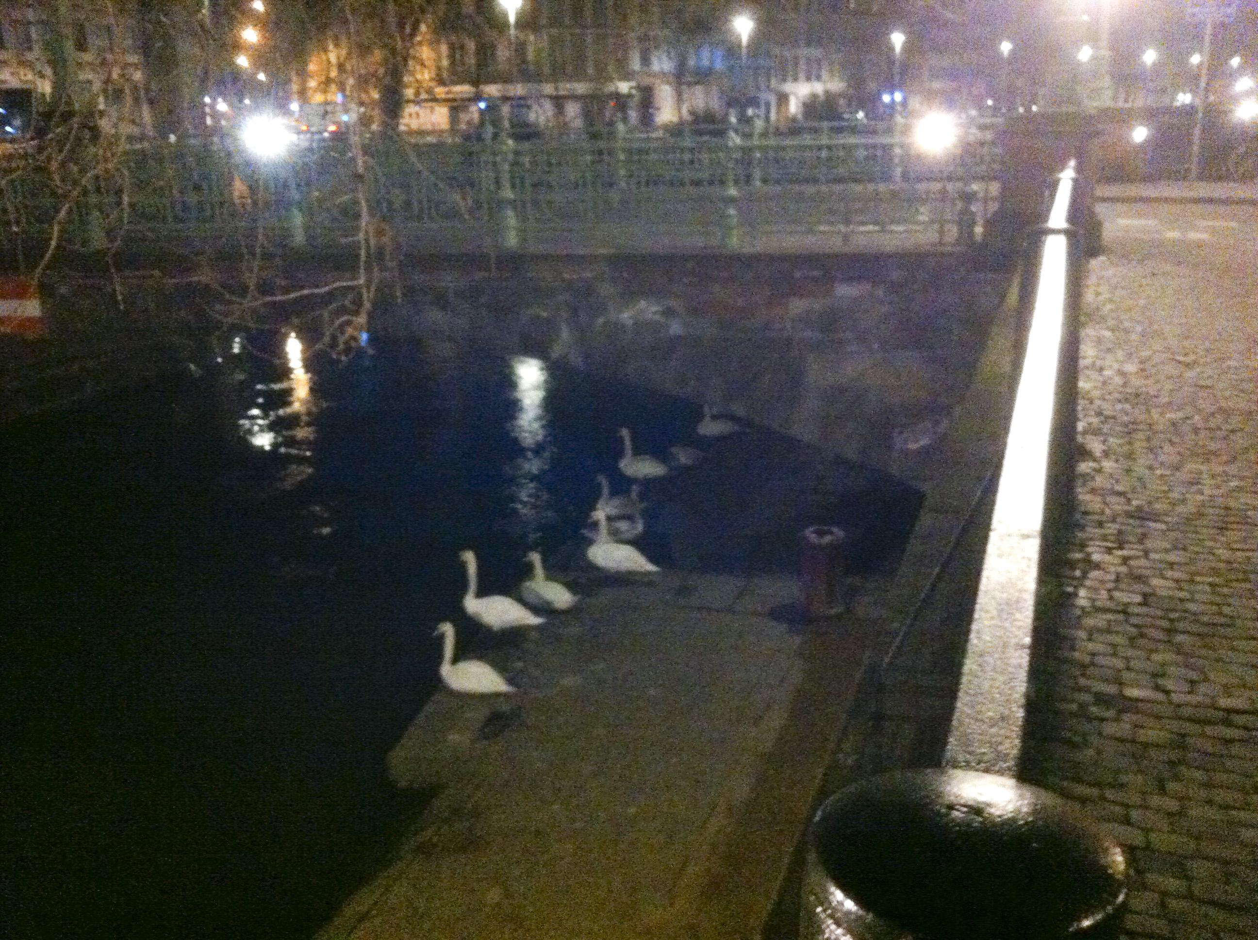 Campement Saint-Guillaume à Strasbourg pas encore évacué…