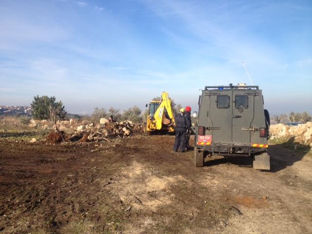 Des oliviers arrachés par Israël pour une route de colons