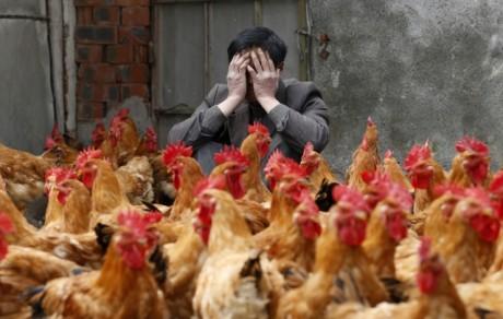H7N9: Si vous êtes pris en grippe…