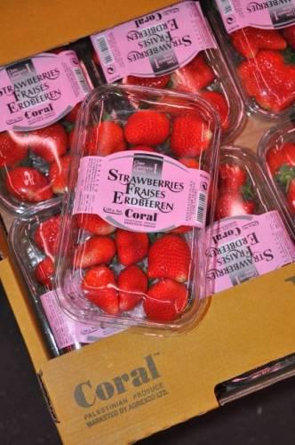 Israël débloque les fraises de Gaza, mais emprisonne les habitants!